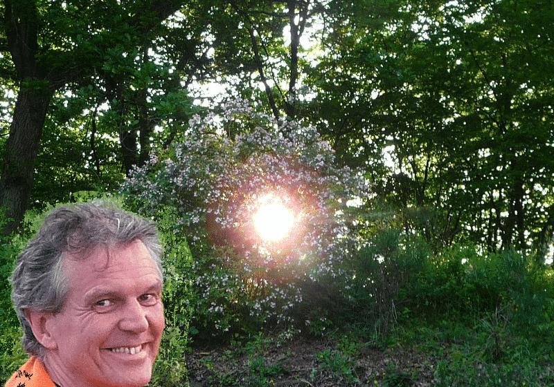 Sonnenbusch
